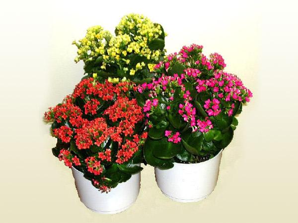 Фото все комнатные цветы какие есть