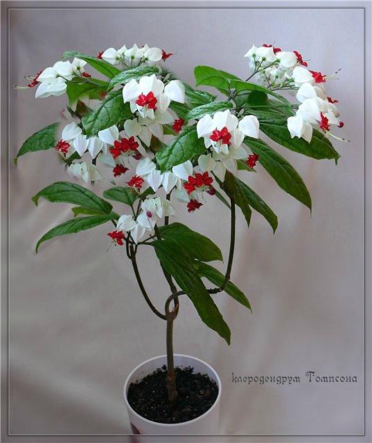 Продаем, обмениваем, дарим домашние растения - 13 - страница 17